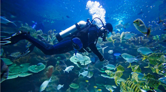 Great blue hole belize diving are absolutely